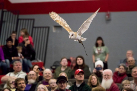 International Festival of the Owls, Houston Minnesota